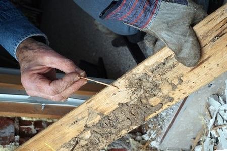 termite_rotated